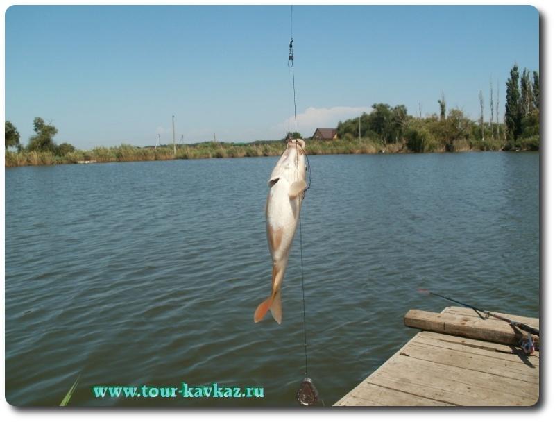 рыбалка в краснодарском крае в кавказском районе