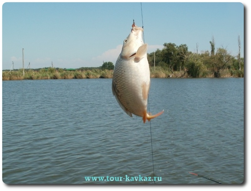 рыбалка карп сазан краснодарский край