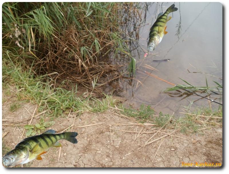 ловля рыбы в динской