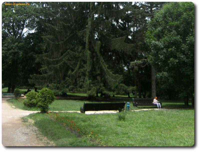 фото дерево картас